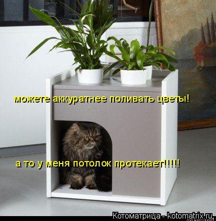 Котоматрица: можете аккуратнее поливать цветы! а то у меня потолок протекает!!!!!