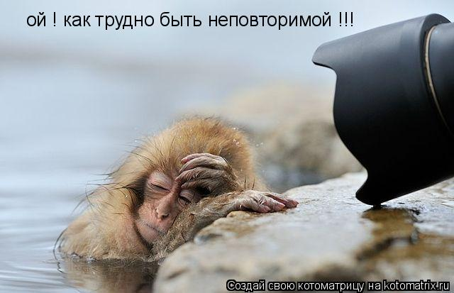 Котоматрица: ой ! как трудно быть неповторимой !!!