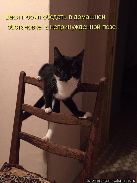 Котоматрица: Вася любил обедать в домашней обстановке, в непринужденной позе...
