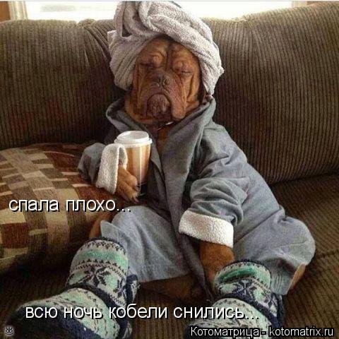 Котоматрица: всю ночь кобели снились... спала плохо...