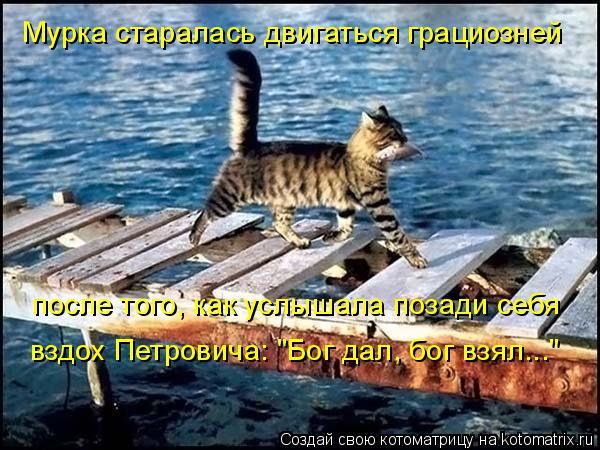 """Котоматрица: Мурка старалась двигаться грациозней после того, как услышала позади себя вздох Петровича: """"Бог дал, бог взял..."""""""