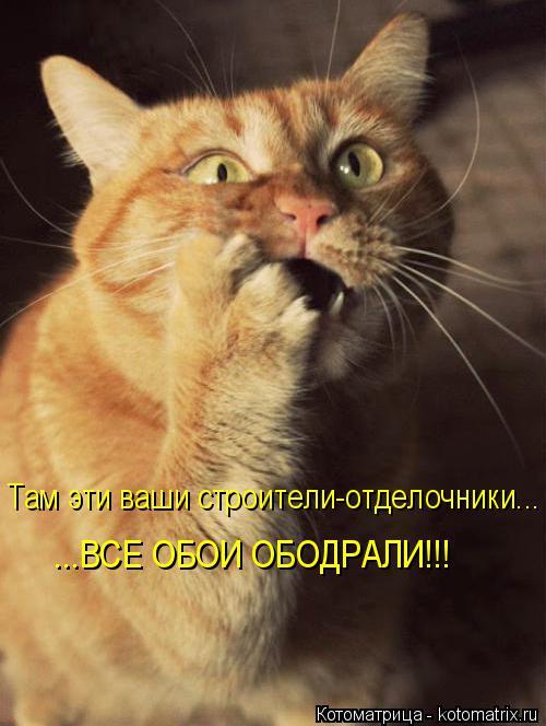 Котоматрица: Там эти ваши строители-отделочники... ...ВСЕ ОБОИ ОБОДРАЛИ!!!
