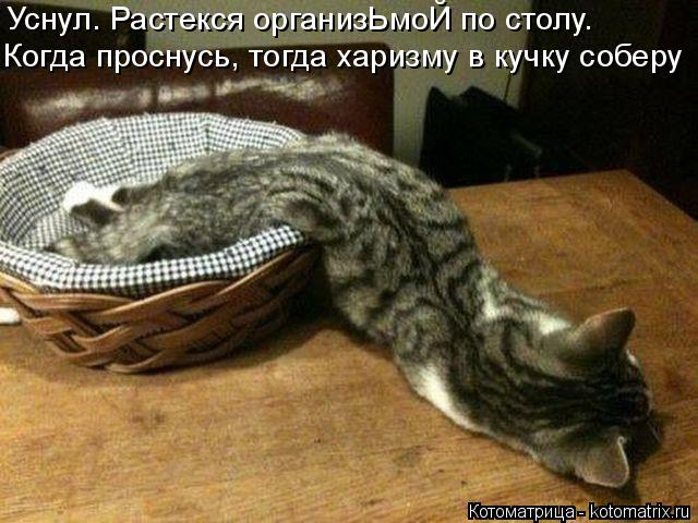 Котоматрица: Когда проснусь, тогда харизму в кучку соберу Уснул. Растекся организЬмоЙ по столу.