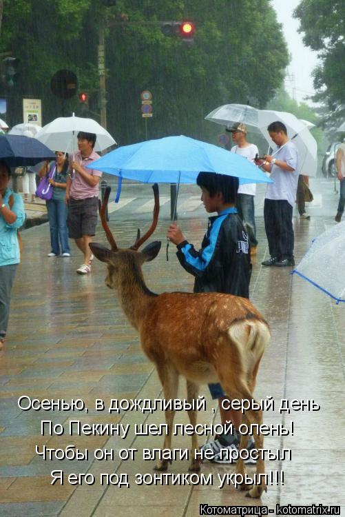 Котоматрица: Осенью, в дождливый , серый день По Пекину шел лесной олень! Я его под зонтиком укрыл!!! Чтобы он от влаги не простыл