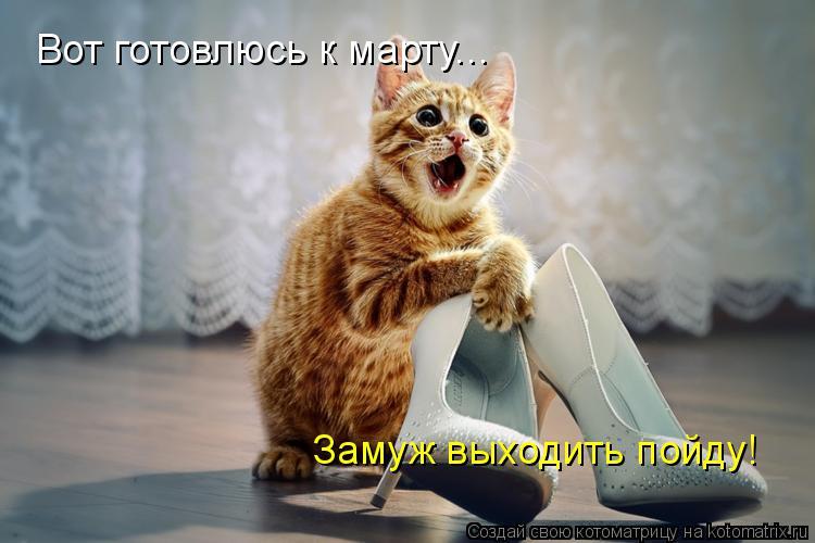 Котоматрица: Вот готовлюсь к марту... Замуж выходить пойду!