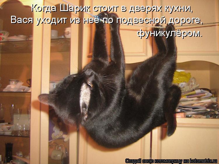 Котоматрица: Когда Шарик стоит в дверях кухни, Вася уходит из неё по подвесной дороге,  фуникулёром.