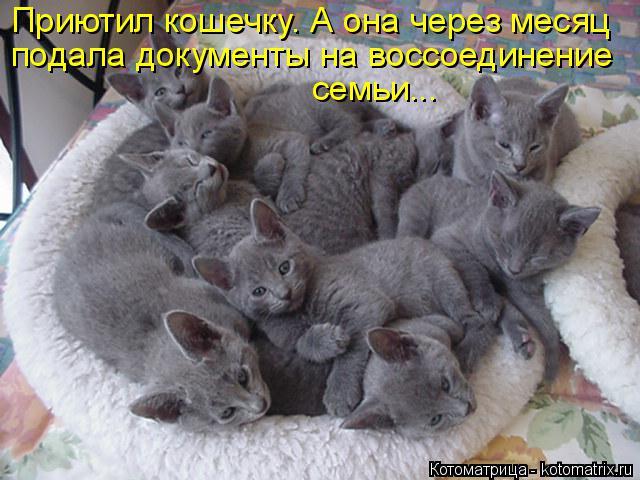 Котоматрица: Приютил кошечку. А она через месяц подала документы на воссоединение семьи...