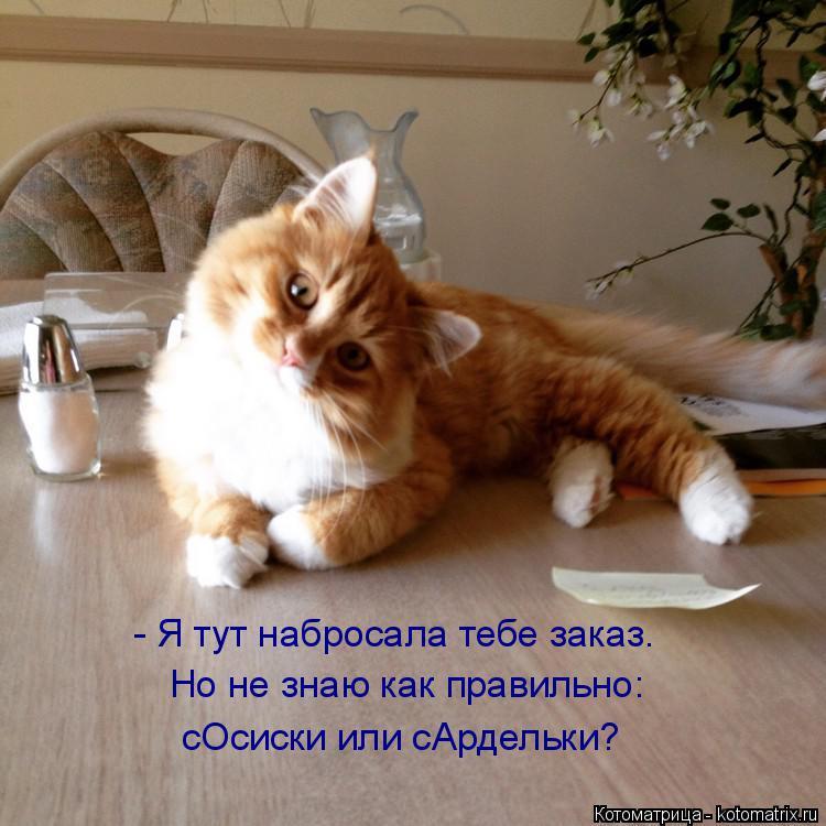 Котоматрица: - Я тут набросала тебе заказ. Но не знаю как правильно: сОсиски или сАрдельки?