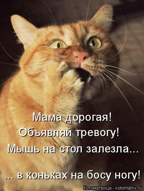 Котоматрица: Мама дорогая! Объявляй тревогу! Мышь на стол залезла... ... в коньках на босу ногу!