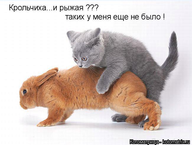 Котоматрица: Крольчиха...и рыжая ??? таких у меня еще не было !