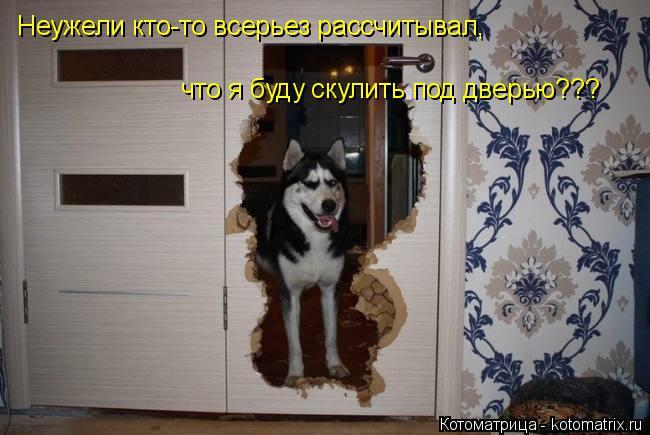 Котоматрица: Неужели кто-то всерьез рассчитывал,  что я буду скулить под дверью???
