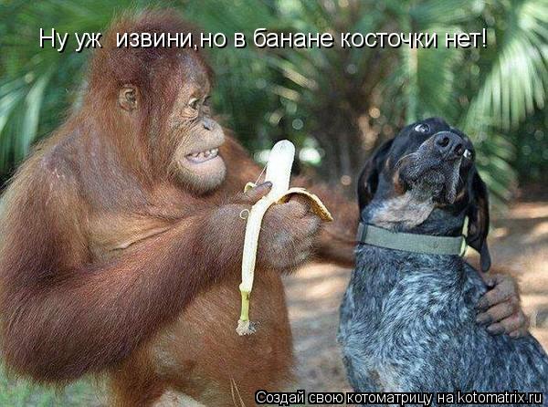 Котоматрица: Ну уж  извини,но в банане косточки нет!