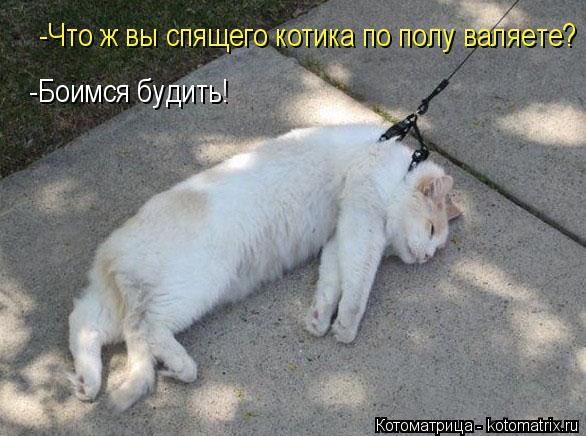 Котоматрица: -Что ж вы спящего котика по полу валяете? -Боимся будить!