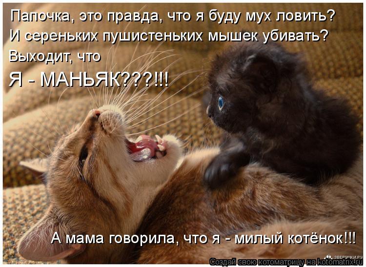Котоматрица: И сереньких пушистеньких мышек убивать? Папочка, это правда, что я буду мух ловить? А мама говорила, что я - милый котёнок!!! Выходит, что  Я - МА