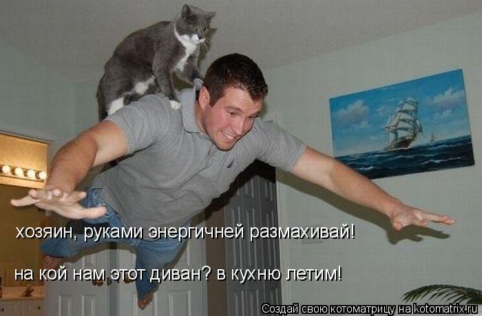 Котоматрица: хозяин, руками энергичней размахивай! на кой нам этот диван? в кухню летим!