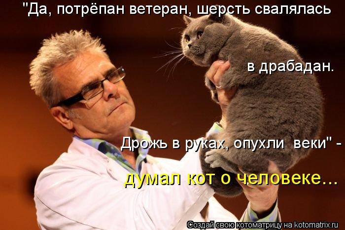 """Котоматрица: """"Да, потрёпан ветеран, шерсть свалялась в драбадан. Дрожь в руках, опухли  веки"""" - думал кот о человеке..."""