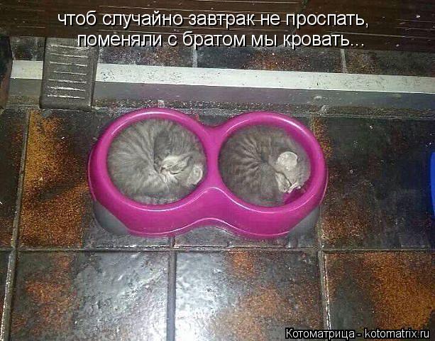 Котоматрица: чтоб случайно завтрак не проспать, поменяли с братом мы кровать...