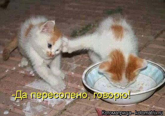kotomatritsa_pP.jpg