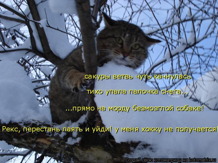 Котоматрица: сакуры ветвь чуть качнулась тихо упала палочка снега... ...прямо на морду безмозглой собаке! Рекс, перестань лаять и уйди! у меня хокку не полу