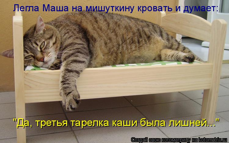 """Котоматрица: Легла Маша на мишуткину кровать и думает: """"Да, третья тарелка каши была лишней..."""""""