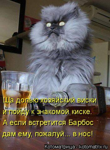 Котоматрица: дам ему, пожалуй... в нос!  А если встретится Барбос  и пойду к знакомой киске.  Ща допью хозяйский виски
