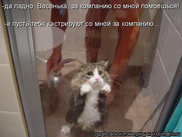Котоматрица: -да ладно, Васенька, за компанию со мной помоешься! -а пусть тебя кастрируют со мной за компанию...