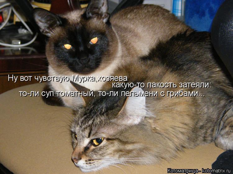 Котоматрица: Ну вот чувствую,Мурка,хозяева  какую-то пакость затеяли: то-ли суп томатный, то-ли пельмени с грибами...