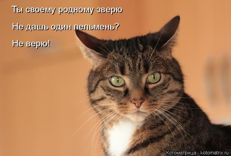 Котоматрица: Ты своему родному звеою Ты своему родному зверю Не дашь один пельмень? Не верю!