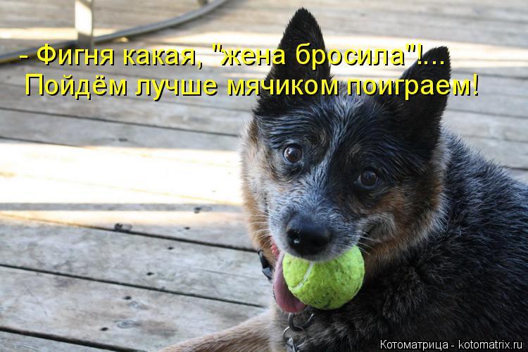 """Котоматрица: - Фигня какая, """"жена бросила""""!... Пойдём лучше мячиком поиграем!"""