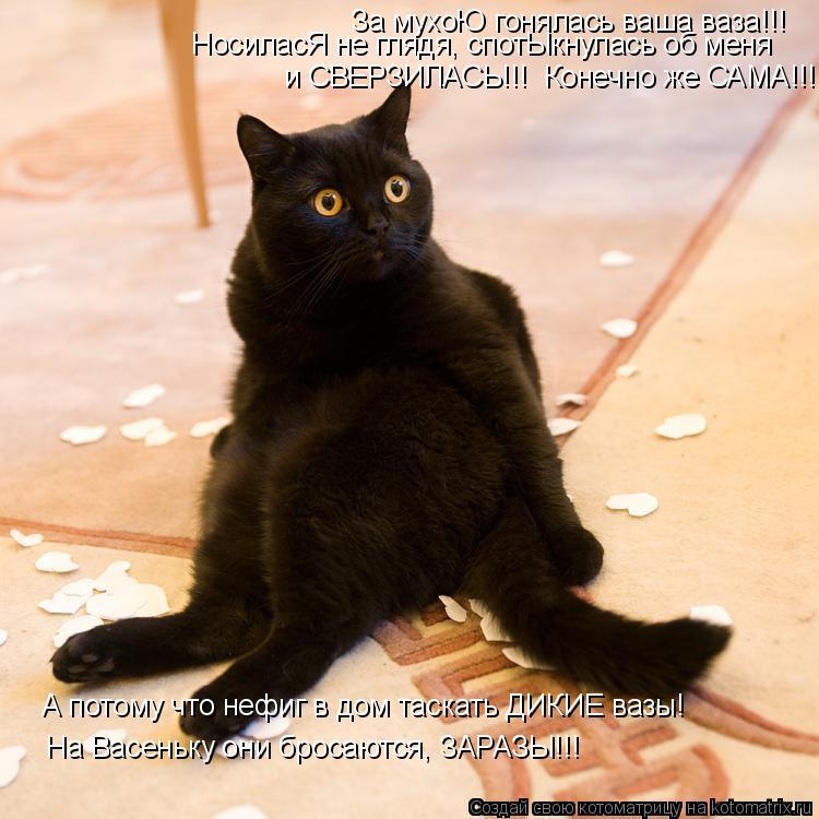 Котоматрица: За мухоЮ гонялась ваша ваза!!! НосиласЯ не глядя, спотЫкнулась об меня и СВЕРЗИЛАСЬ!!!  Конечно же САМА!!! А потому что нефиг в дом таскать ДИКИ