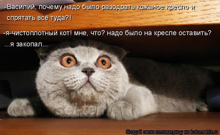 Котоматрица: -Василий, почему надо было разодрать кожаное кресло и  спрятать всё туда?! ...я закопал... -я-чистоплотный кот! мне, что? надо было на кресле оста