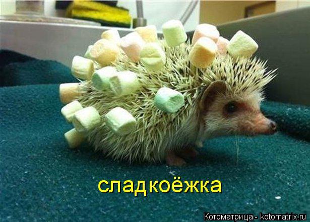 Котоматрица: сладкоёжка