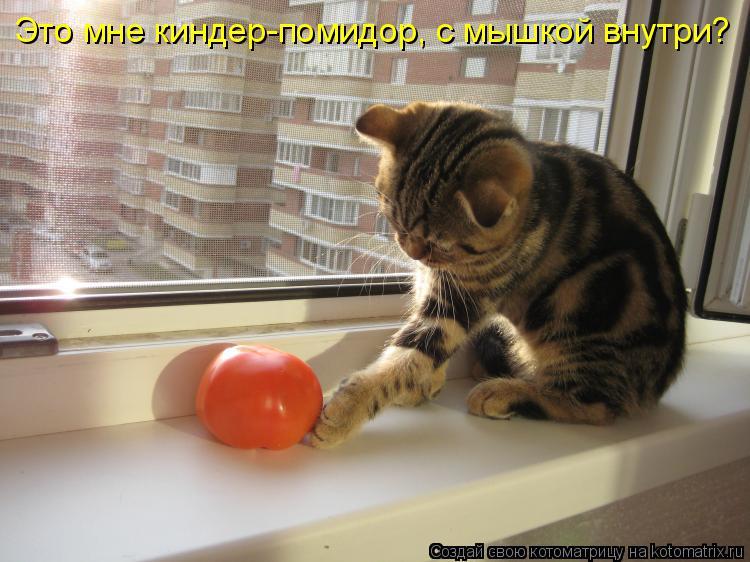 Котоматрица: Это мне киндер-помидор, с мышкой внутри?