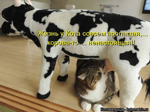 Котоматрица: Жизнь у Кота совсем пропащая,... корова-то ... ненастоящая!!