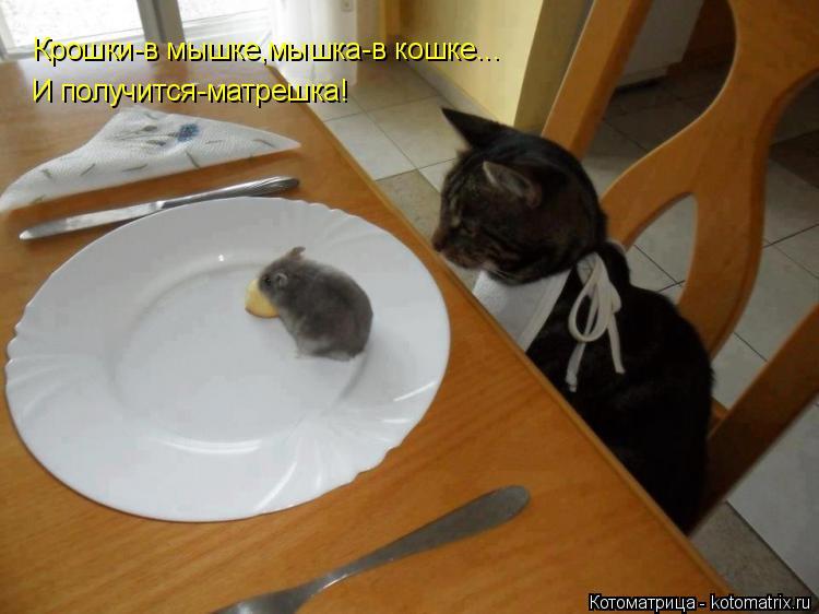 Котоматрица: Крошки-в мышке,мышка-в кошке... И получится-матрешка!