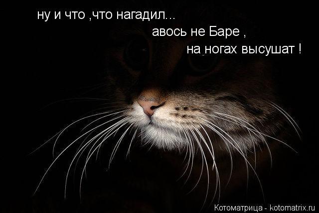 Котоматрица: ну и что ,что нагадил... авось не Баре , на ногах высушат !