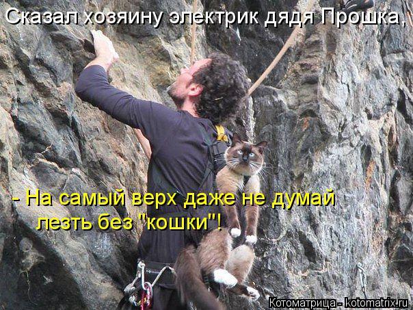 """Котоматрица: Сказал хозяину электрик дядя Прошка, - На самый верх даже не думай лезть без """"кошки""""!"""