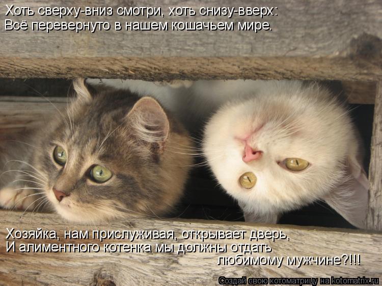 Котоматрица: Хоть сверху-вниз смотри, хоть снизу-вверх: Всё перевернуто в нашем кошачьем мире. Хозяйка, нам прислуживая, открывает дверь, И алиментного к