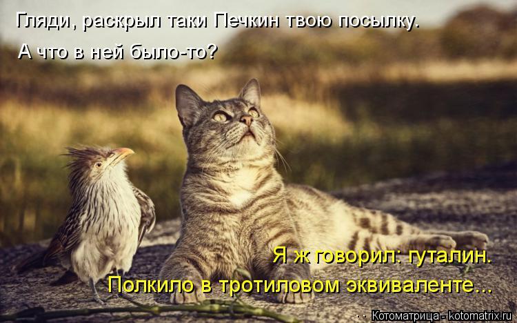Котоматрица: Гляди, раскрыл таки Печкин твою посылку.  А что в ней было-то? Я ж говорил: гуталин.  Полкило в тротиловом эквиваленте...