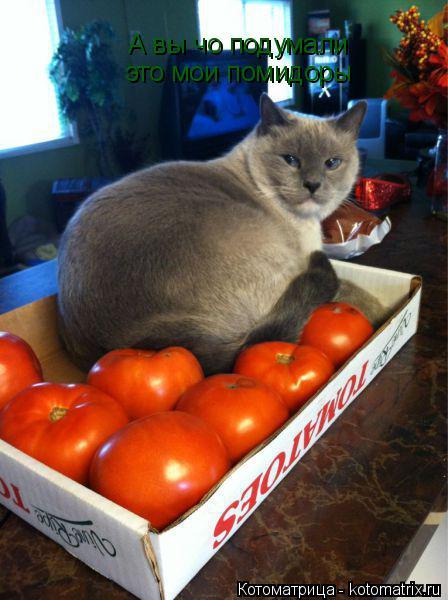 Котоматрица: А вы чо подумали  это мои помидоры