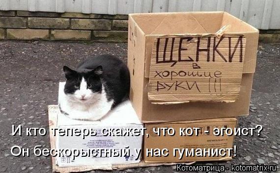 Котоматрица: И кто теперь скажет, что кот - эгоист? Он бескорыстный у нас гуманист!