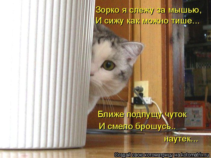 Котоматрица: И сижу как можно тише... Ближе подпущу чуток И смело брошусь.. наутек... Зорко я слежу за мышью,