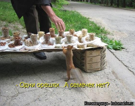 Котоматрица: - Одни орешки...А семечек нет?