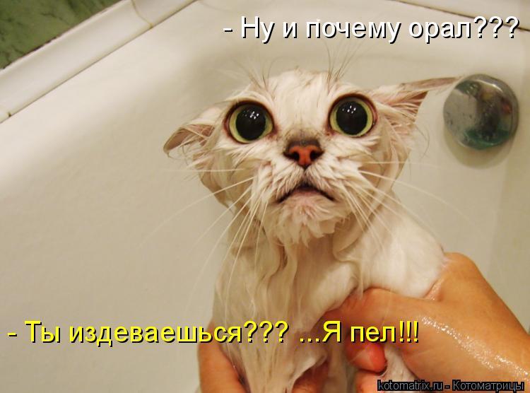 Котоматрица: - Ты издеваешься??? ...Я пел!!! - Ну и почему орал???