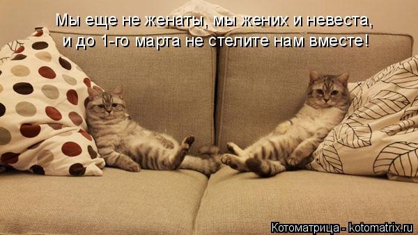 Котоматрица: Мы еще не женаты, мы жених и невеста, и до 1-го марта не стелите нам вместе!