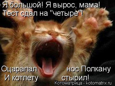"""Котоматрица: Я большой! Я вырос, мама! Оцарапал              нос Полкану Тест сдал на """"четыре""""! И котлету           стырил!"""