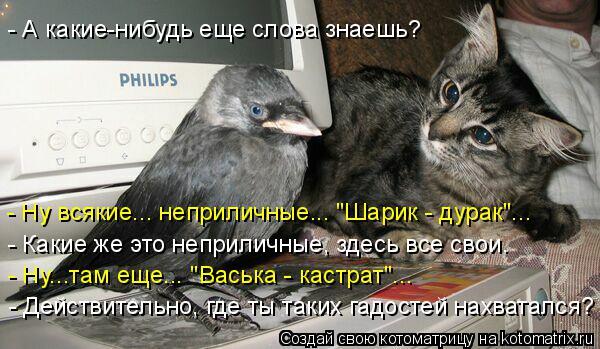 """Котоматрица: - А какие-нибудь еще слова знаешь? - Ну всякие... неприличные... """"Шарик - дурак""""... - Какие же это неприличные, здесь все свои. - Ну...там еще... """"Васька"""