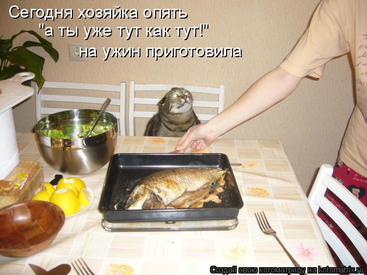 """Котоматрица: Сегодня хозяйка опять """"а ты уже тут как тут!"""" на ужин приготовила"""