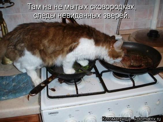 Котоматрица: Там на не мытых сковородках, следы невиданных зверей.