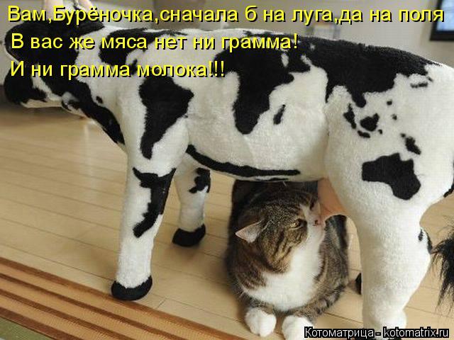 Котоматрица: Вам,Бурёночка,сначала б на луга,да на поля В вас же мяса нет ни грамма!  И ни грамма молока!!!